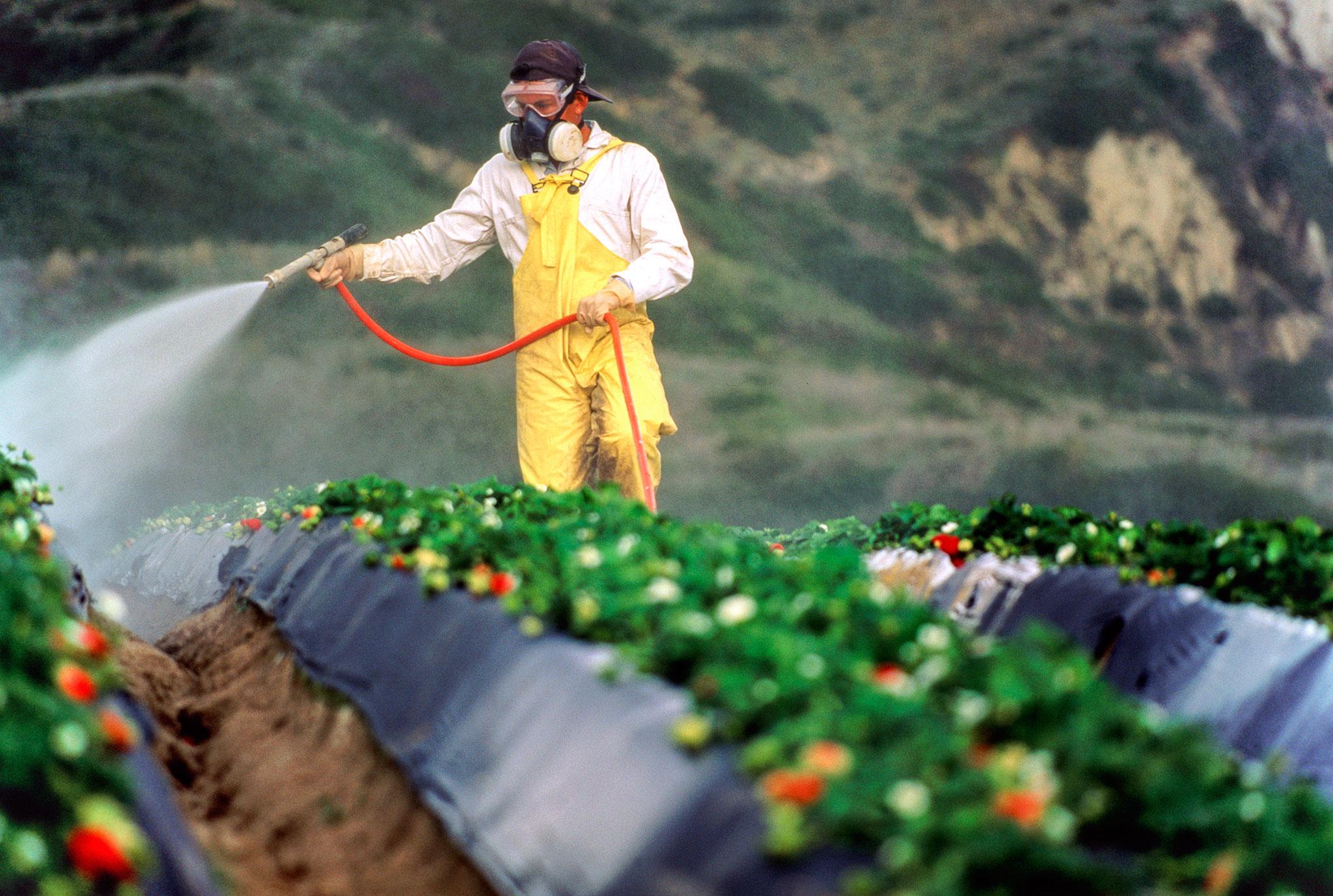 حمایت های موسسه دانشمند در حوزه استفاده از تکنیک های جدید کنترل آفات باغداری نتیجه داد / گسترش استفاده از روش هستهای نابارورسازی در کنترل آفات باغداری